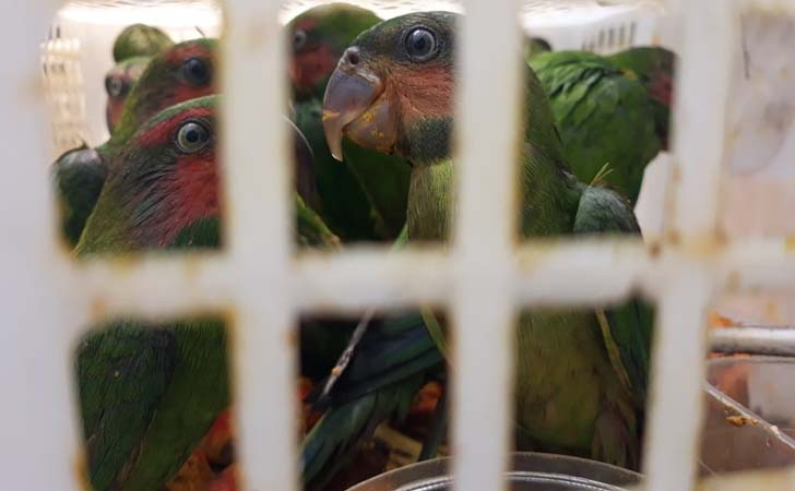 Burung Dilidungi Dijualbelikan