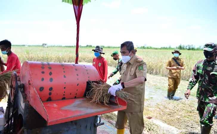 Gubernur Riau dan Forkopimda Panen Raya