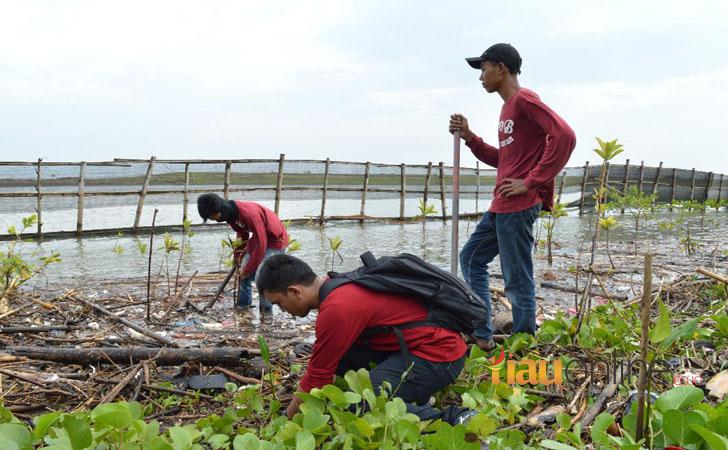 Hutan Mangrove Yogya2