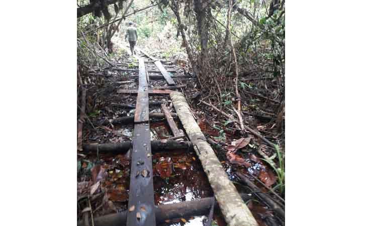 Illegal Logging di Cagar Biosfer Giam Siak Kecil