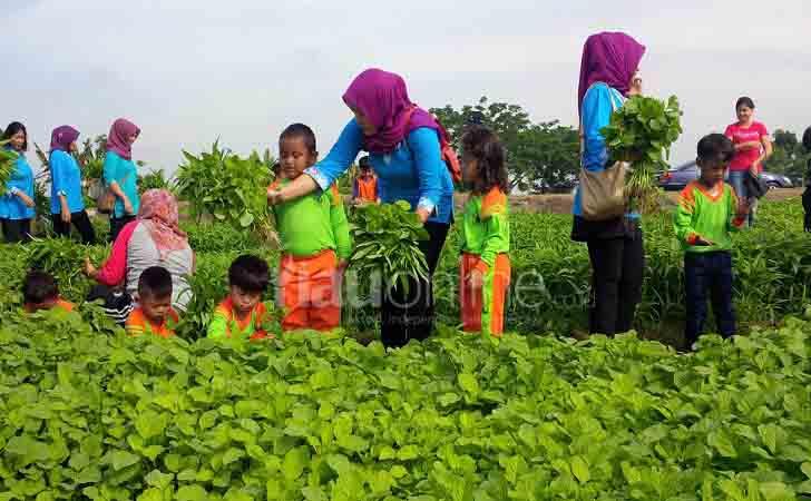 Anak-TK-Panen-Sayur.jpg