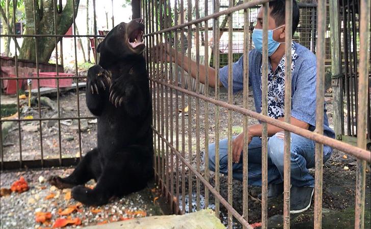 Beruang-Madu-BBKSDA.jpg