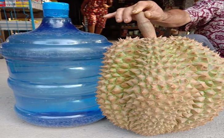 Durian-raksasa.jpg