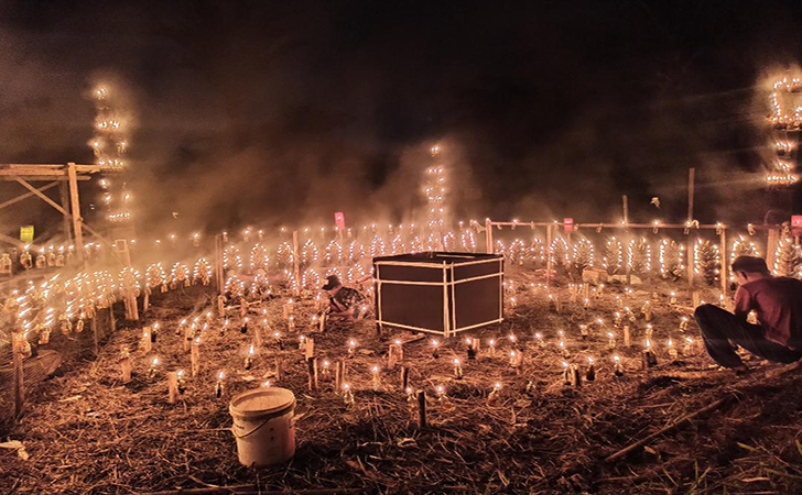 Festival-Lampu-Colok.jpg