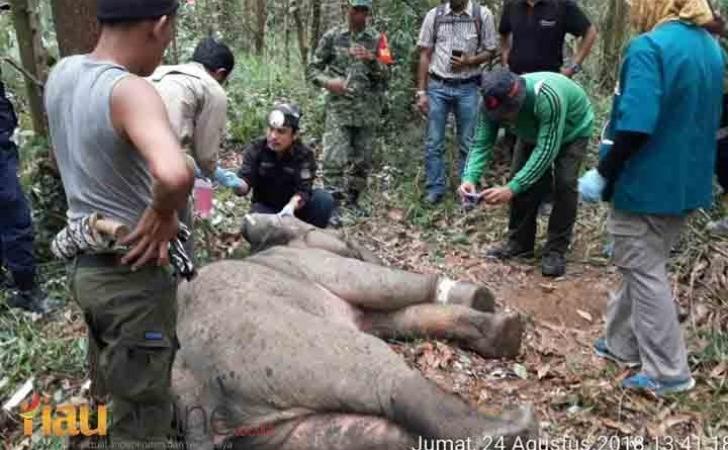 Gajah-Liar-terluka.jpg
