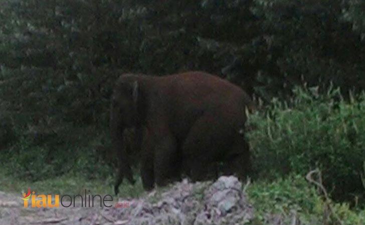 Gajah-liar.jpg