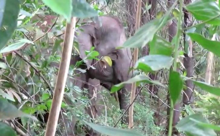 Gajah-masuk-kampung10.jpg