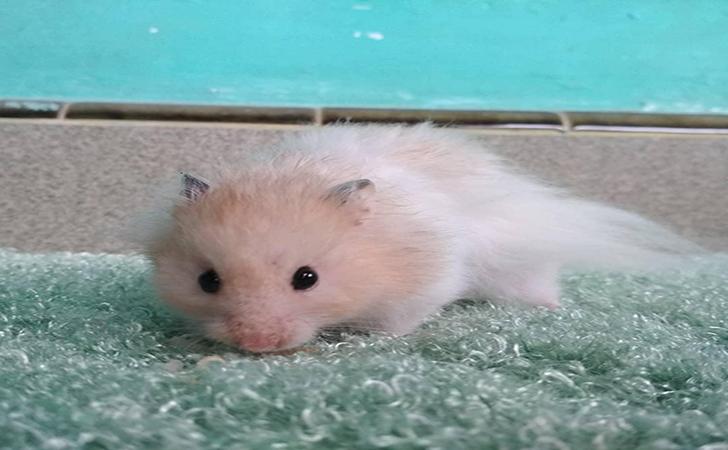 Hamster2.jpg