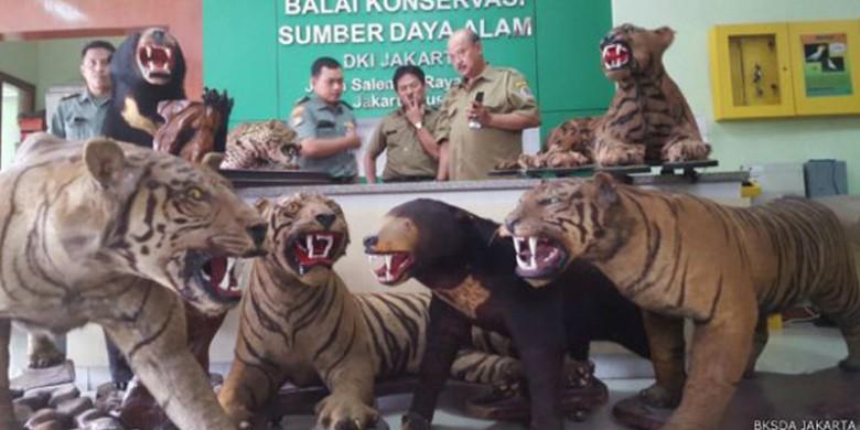 Harimau-Sumatera-Awetan-Milik-Mendagri.jpg