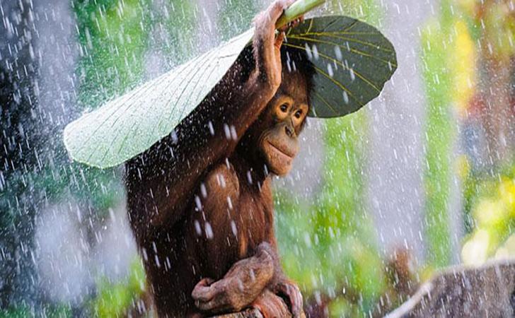 Hujan13.jpg