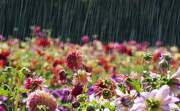 Hujan28.jpg