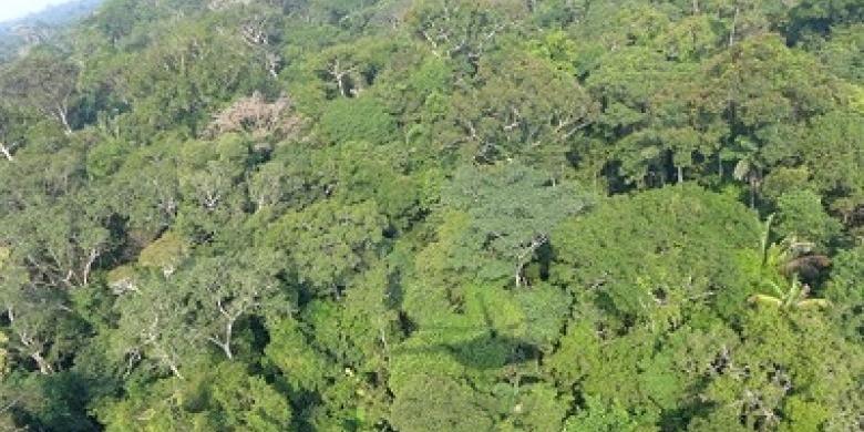 Hutan-Amazon.jpg