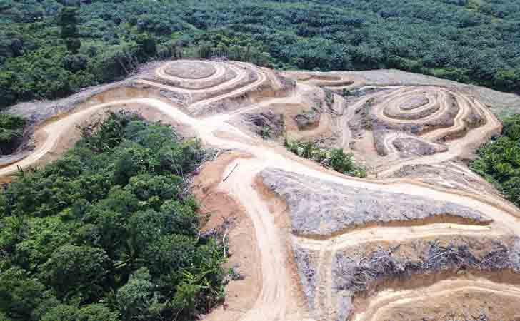 Hutan-Gundul-Ditanami-Sawit.jpg