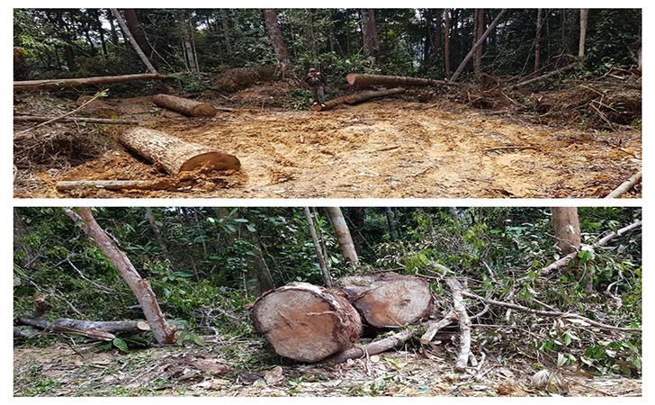 Ilegal-Logging3.jpg
