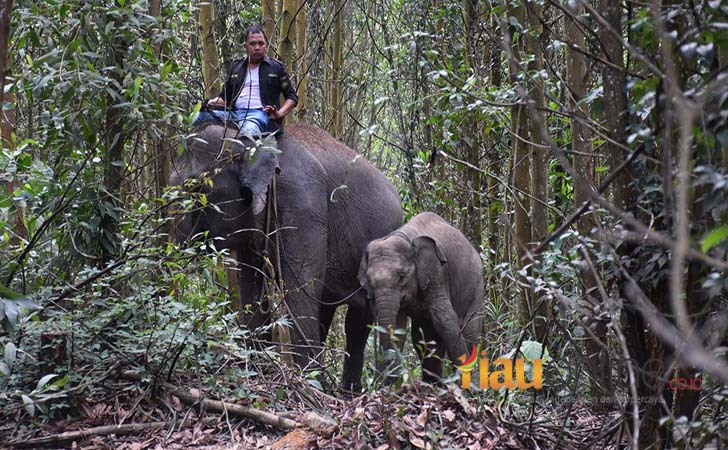 Intan-anak-gajah.jpg