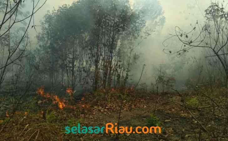 Kebakaran-Hutan-dan-Lahan-di-Bengkalis.jpg