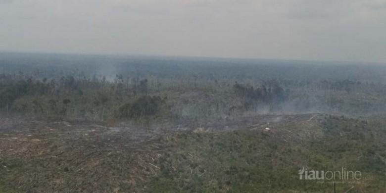 Kebakaran-Kawasan-Konservasi-TNTN.jpg