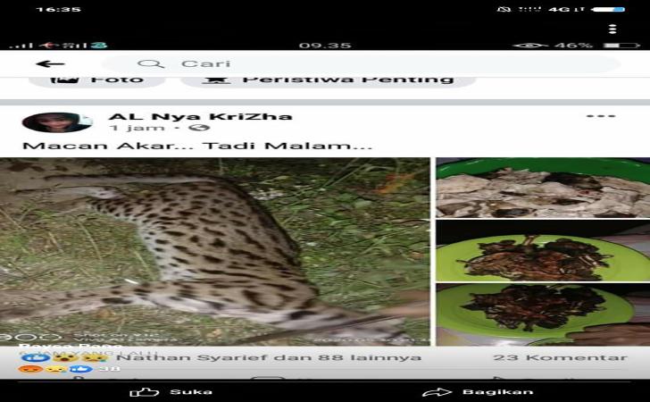 Kucing-Hutan2.jpg