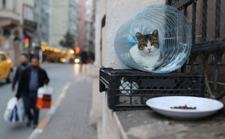 Kucing-di-Istanbul.jpg