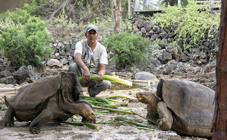 Kura-kura-Galapagos.jpg