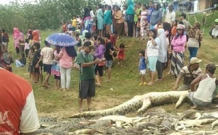 Pembantaian-buaya-di-Sorong.jpg