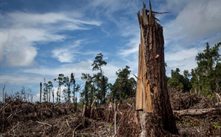 Perambahan-Hutan.jpg