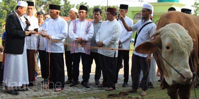 Sapi-Kurban-Presiden-Joko-Widodo.jpg