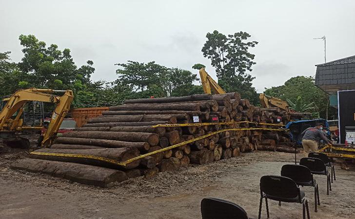Sawmill-Ilegal2.jpg