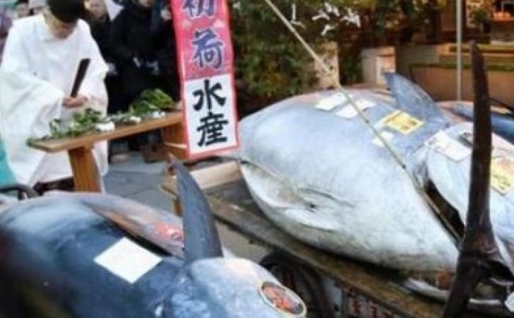 Tuna-Sirip-Biru.jpg