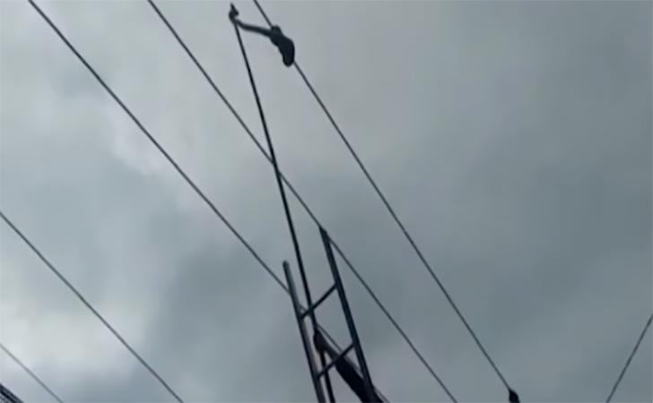 Ular-sanca-melilit-di-kabel.jpg