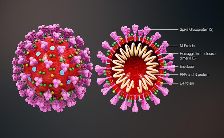 Virus-corona7.jpg