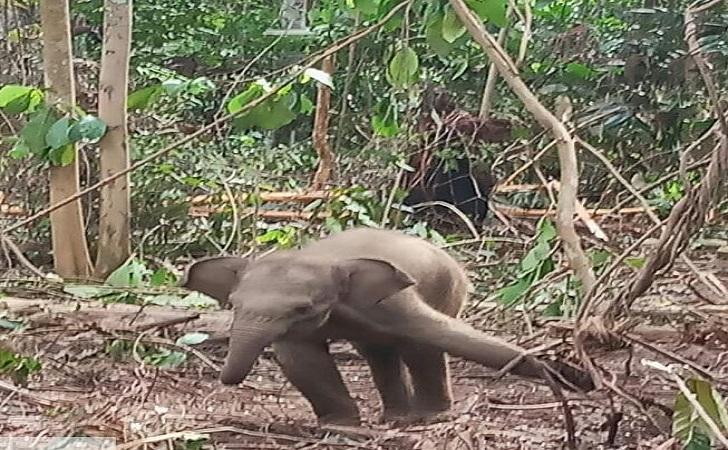 anak-gajah.jpg
