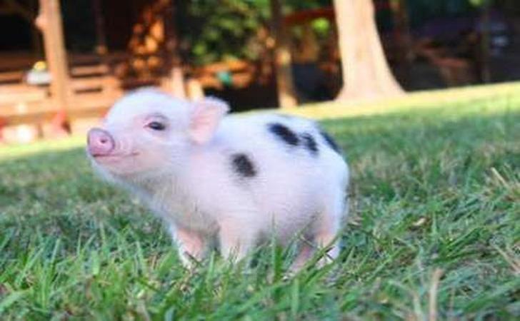 babi2.jpg