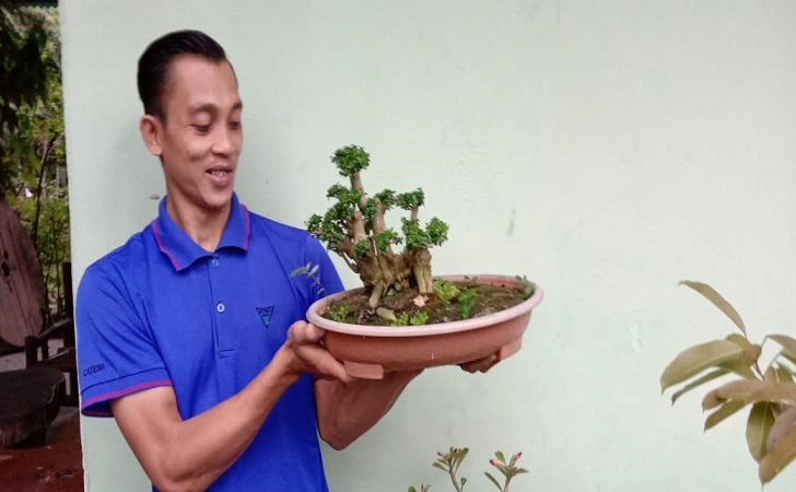 bonsai-wacang.jpg