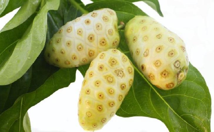 buah-mengkudu.jpg