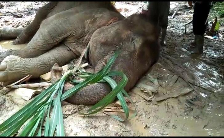 gajah-mati.jpg