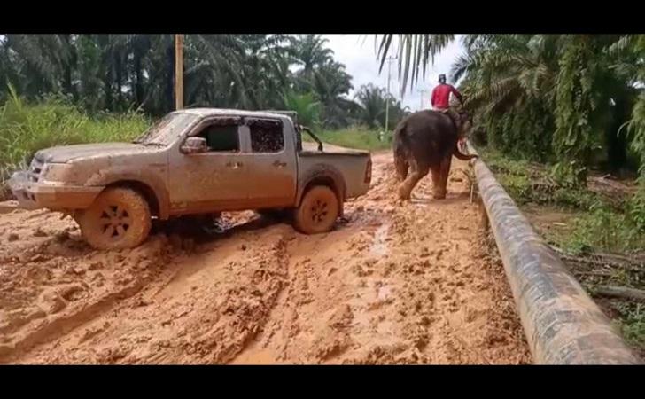 gajah-tarik-mobil.jpg