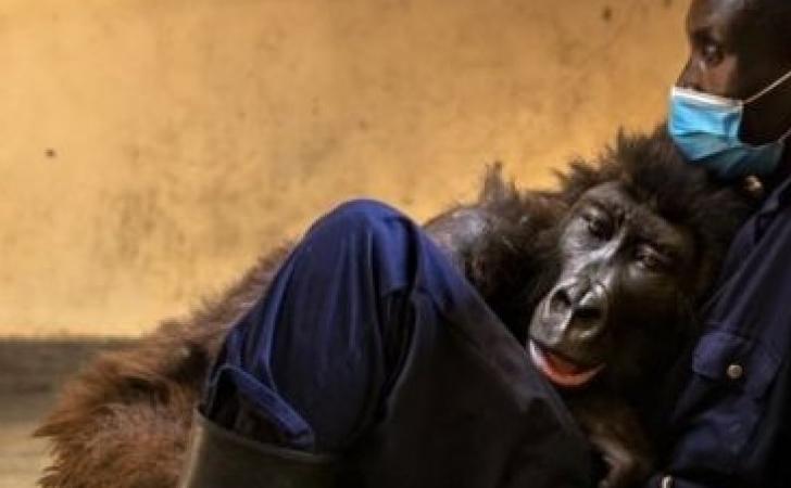 gorila-mati.jpg