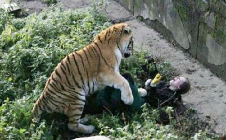 harimau-serang-warga.jpg