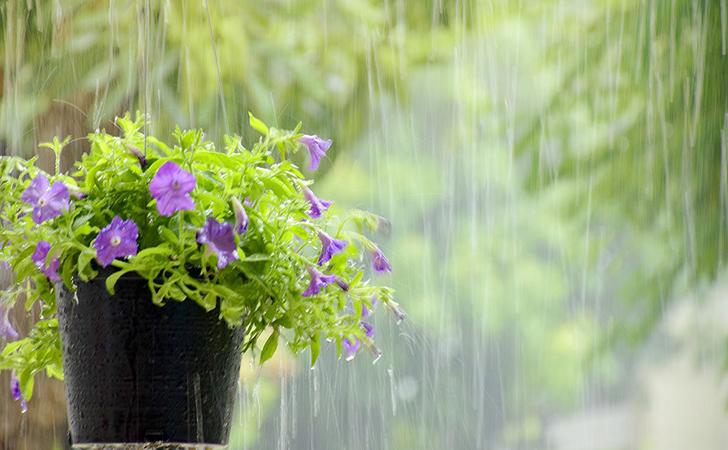 hujan19.jpg