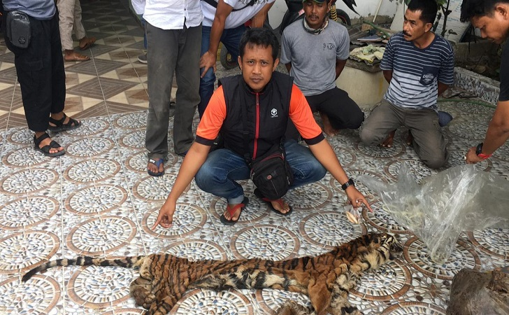 perdagangan-kulit-harimau.jpg
