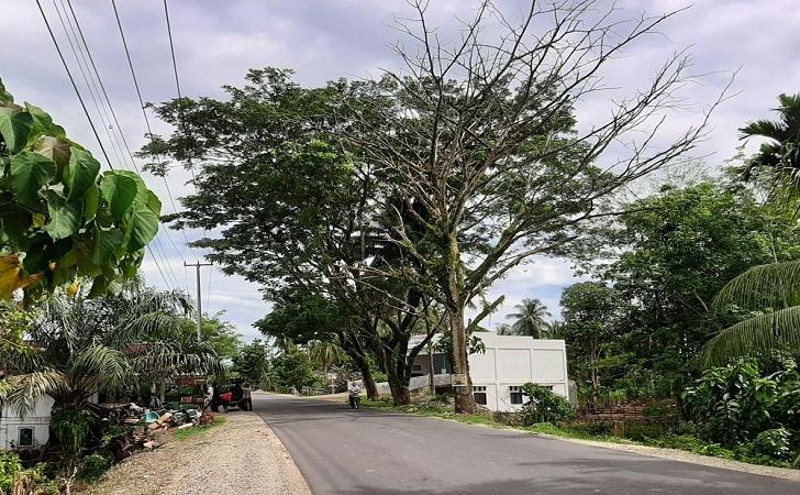 pohon-lapuk.jpg
