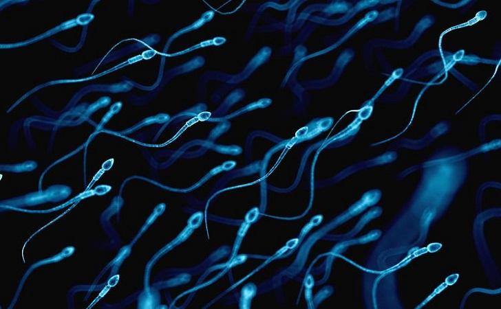sperma.jpg