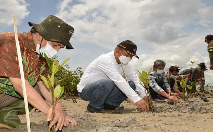 tanam-mangrove.jpg