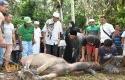 BUPATI-Kampar-Azis-Zaenal-menyaksikan-penyembelihan-hewan-kurbannya.jpg