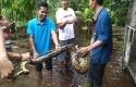 Banjir10.jpg