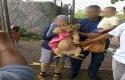 Bayi-Singa-Afrika.jpg