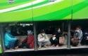 Bidik-layar-viral-foto-penumpang-bersembunyi-di-bagasi-barang-bus-AKAP.jpg