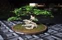 Bonsai-Legundi.jpg