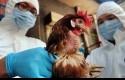 Flu-burung.jpg